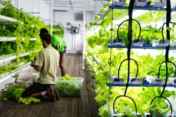 urban container farm
