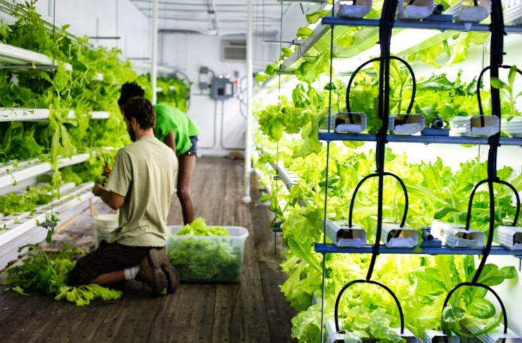 urban container farm