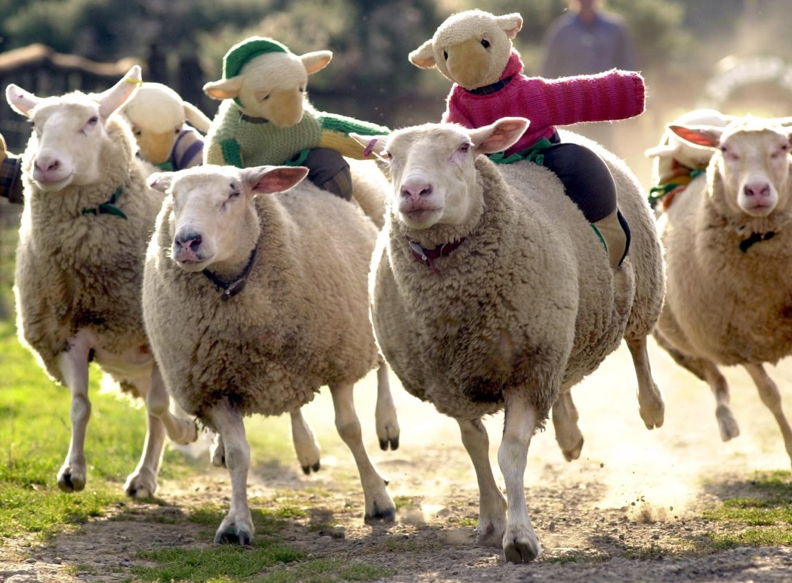 What's the Strangest Thing a Farmer's Ever Done with a Sheep?