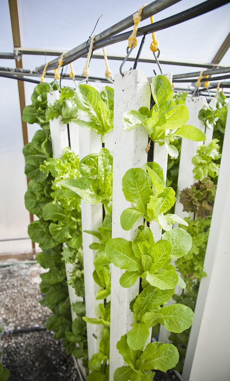 Vertical Farming: What's Stopping Farming from Going 100% Urban?