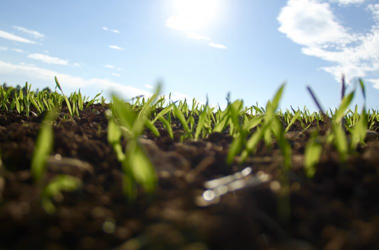 seedlings growing