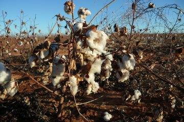 Australian cotton farming