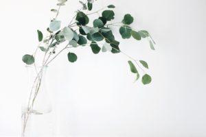 best ecommerce website design sydney