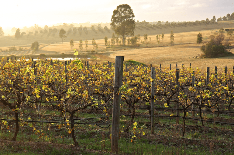 The Hunter Valley: the Perfect Day Trip From Sydney
