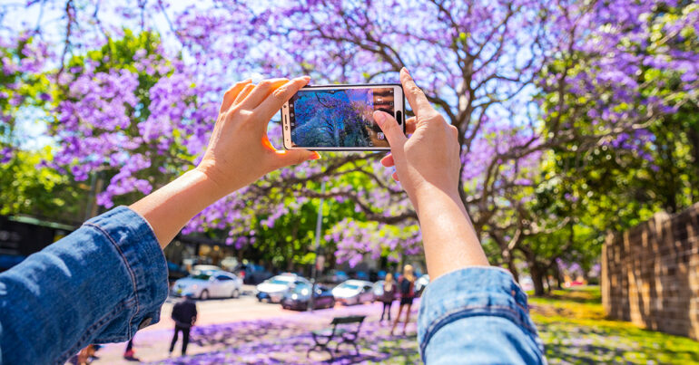 Where To See Jacaranda Trees in Sydney
