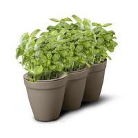 Grey Ivy Herb Planter with Miniature Leaf Cutters