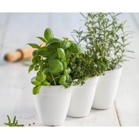 White Ivy Herb Planter x3 + Miniature Leaf Cutters