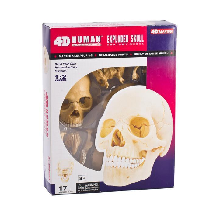 Human Skull Anatomy Model Puzzle | 4D | Buy Anatomical Models