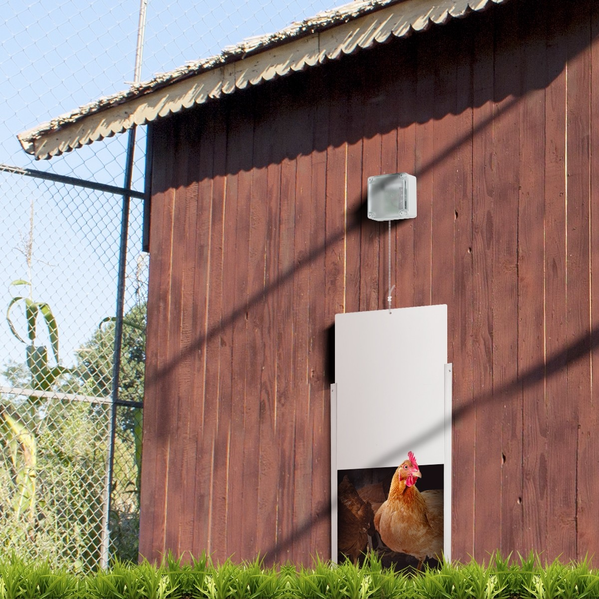 Automatic Chicken Door Coop Chicken Cage With Timer