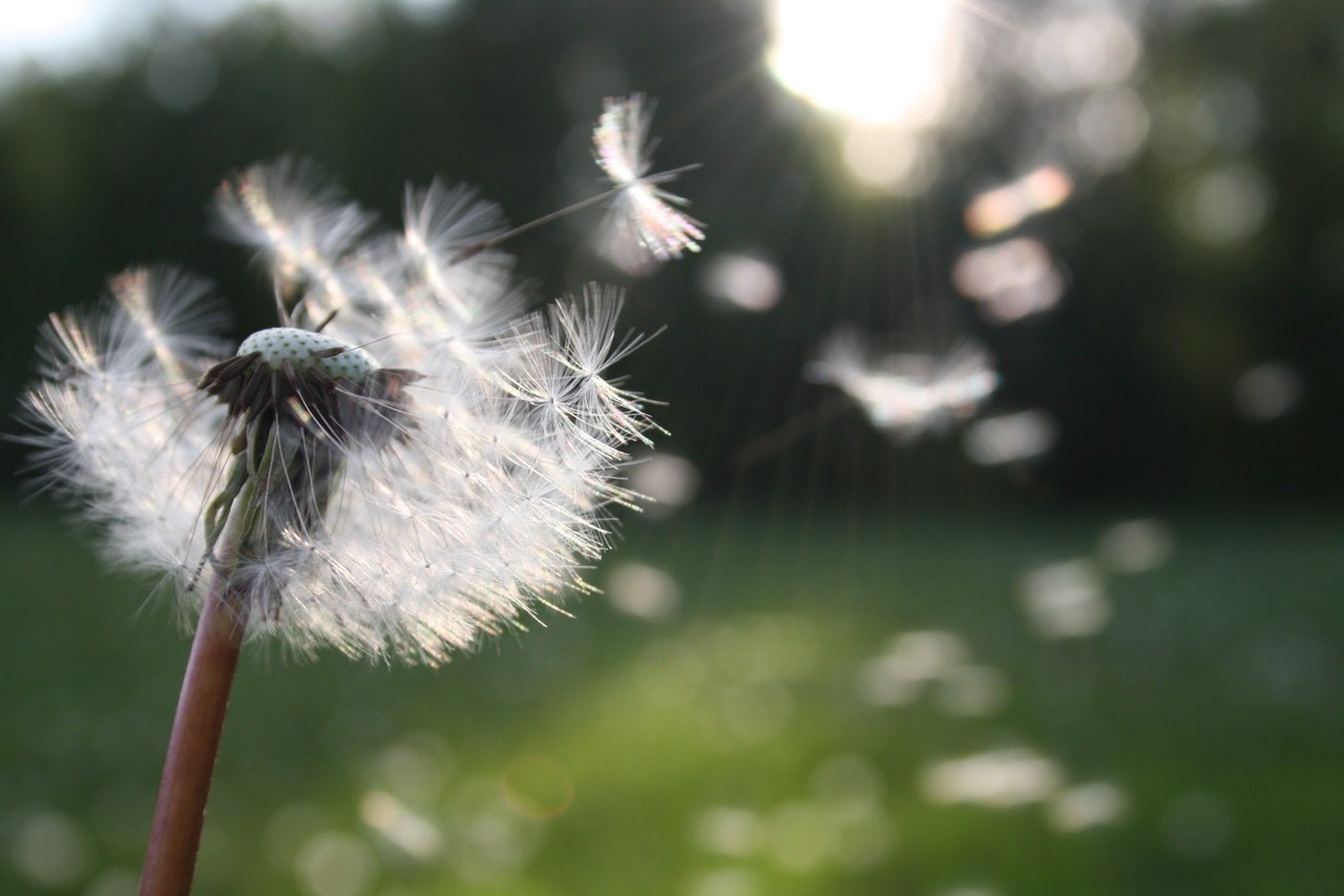 7 Ways To Relieve Allergies Naturally