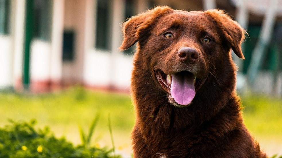 Tips For Pet-Sitting: Caring for Friends or Family's Pets