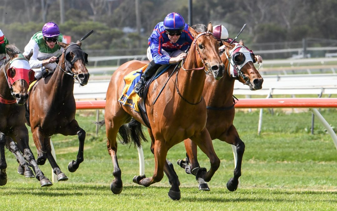 Twitchy Frank goes close at Bendigo on Saturday