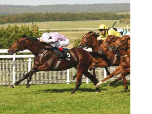 Australian Bloodstock Purchases Melbourne Cup Prospect