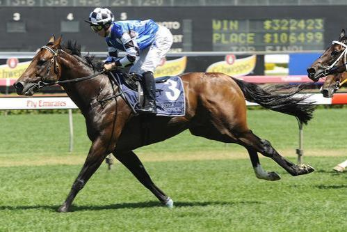 Cardinal Virtue To WA Stud