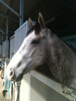 Want To Race A Group Class 2yo? FOR SALE NOW!