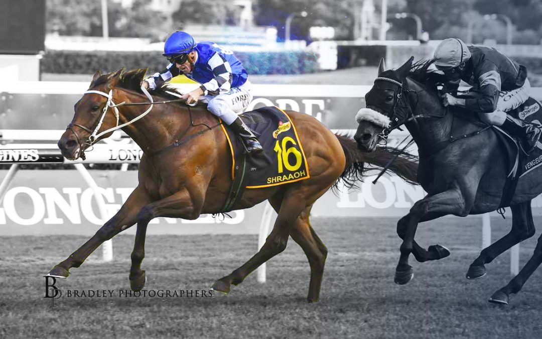 Full brother to Sydney Cup winner secured by Australian Bloodstock
