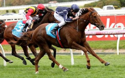 Widgee Turf Becomes A Millionaire In VOBIS Gold Mile