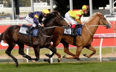 Grunt Bossed In Caulfield Gallop