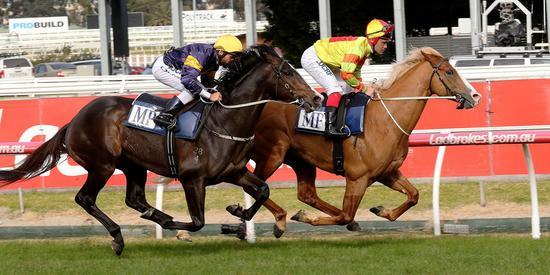 Grunt-Bossed-In-Caulfield-Gallop