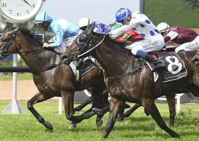 Oregons-Day-Hard-To-Beat-In-Doomben-Cup