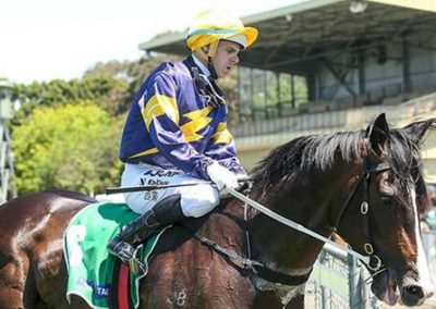 Prices-Guineas-Hand-Has-Grunt