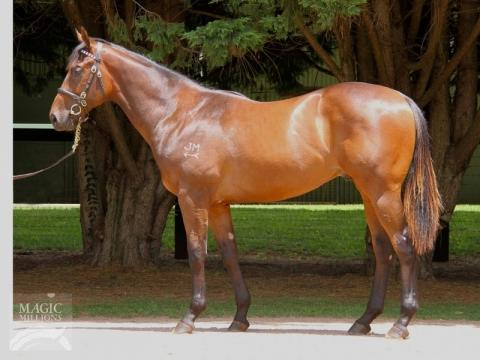 THIRD GOLD COAST PURCHASE BY PROVEN THOROUGHBREDS