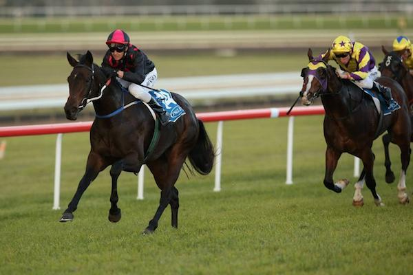 Loved Up Wins Scone Guineas