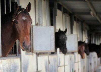 B-Cavanough-Horse-photo-by-Tara-Ashworth-