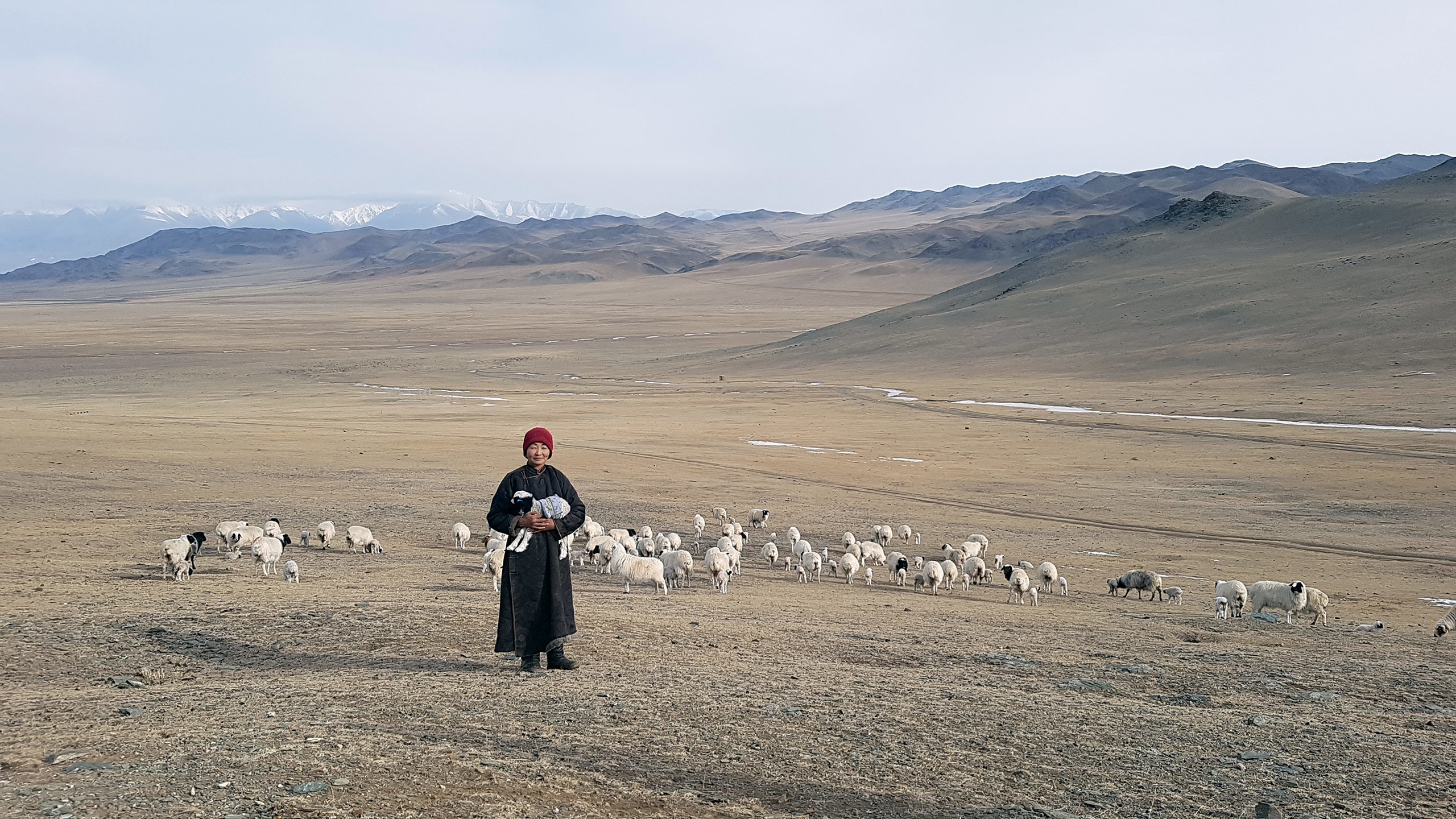 Mongolian spring - Resident with herd of goats