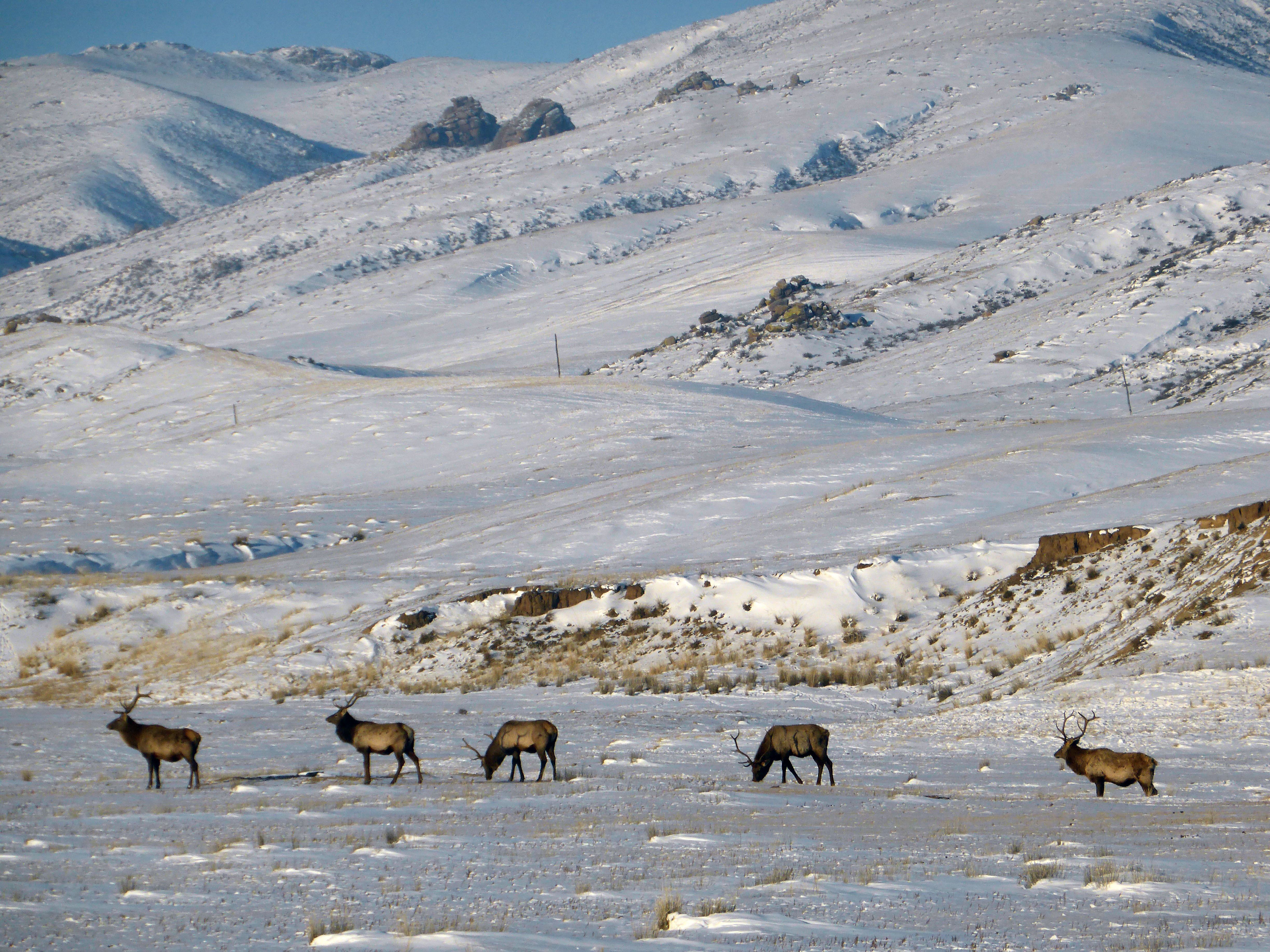 Khustai National Park: Snow mountains with free reindeer