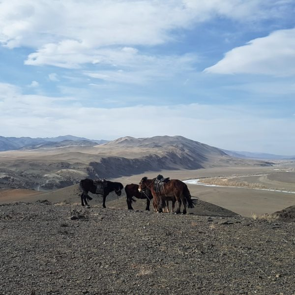 2019 Horses In The Altai Mountains