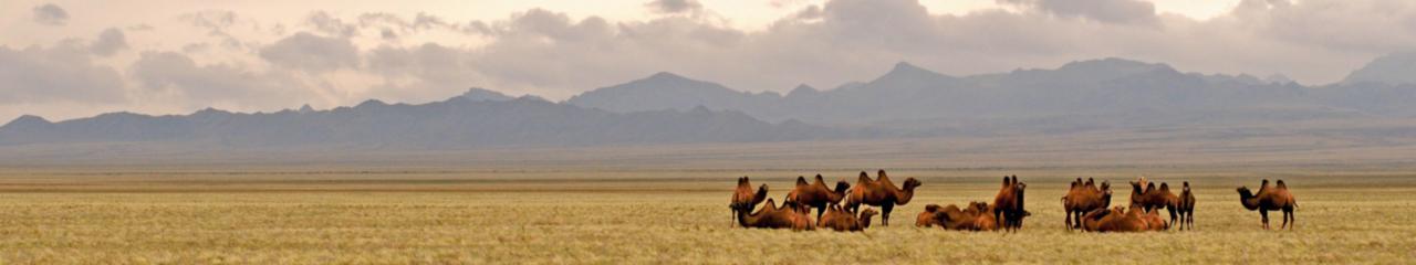 The Gobi Desert Animals