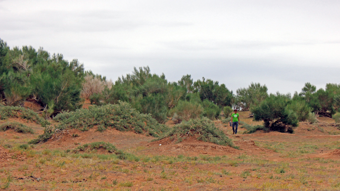 Saxual forest, The Gobi Desert