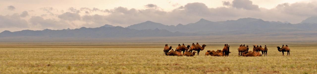About Mongolian Gobi Desert
