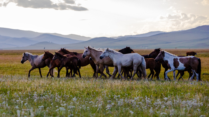 The horse breeders' paradise, Eastern Mongolia