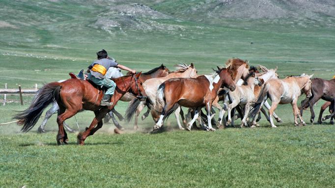 Mongolian horse culture