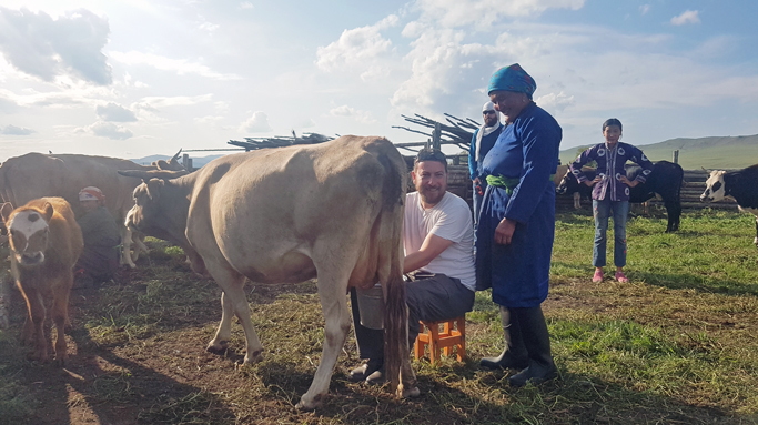 Helping Mongolian nomads with milking cows