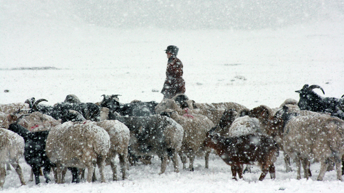 Nomadic herder in winter, Central Mongolia