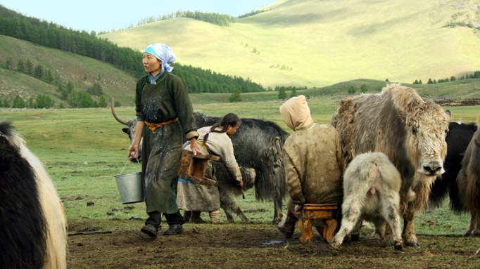 Nomadic women milking yaks, Central Mongolia