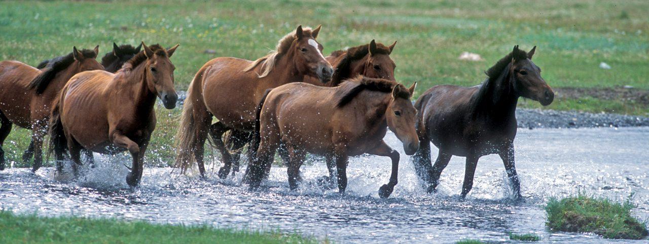 Mongolia Horse Culture Tour