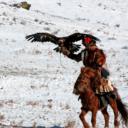 Golden Eagle & Wildlife Tour
