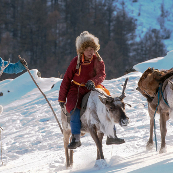 Winter Tsaatan Reindeer People Tour