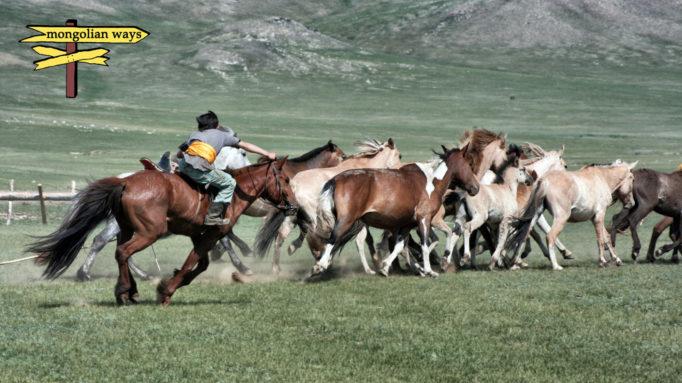 Horse Herder