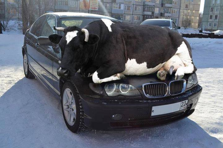 Warming your car bonnet on a cold winter morning