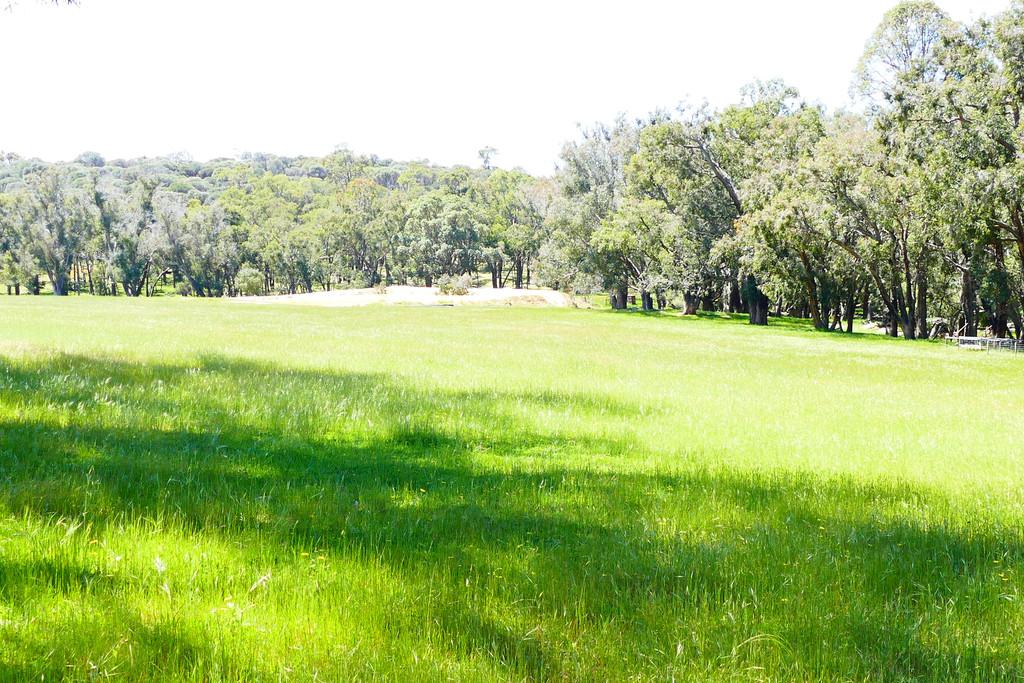 P/L A Rainoldi Road Benjinup - Mixed Farming For Sale - 19994566 - ACTON South West (Bunbury)