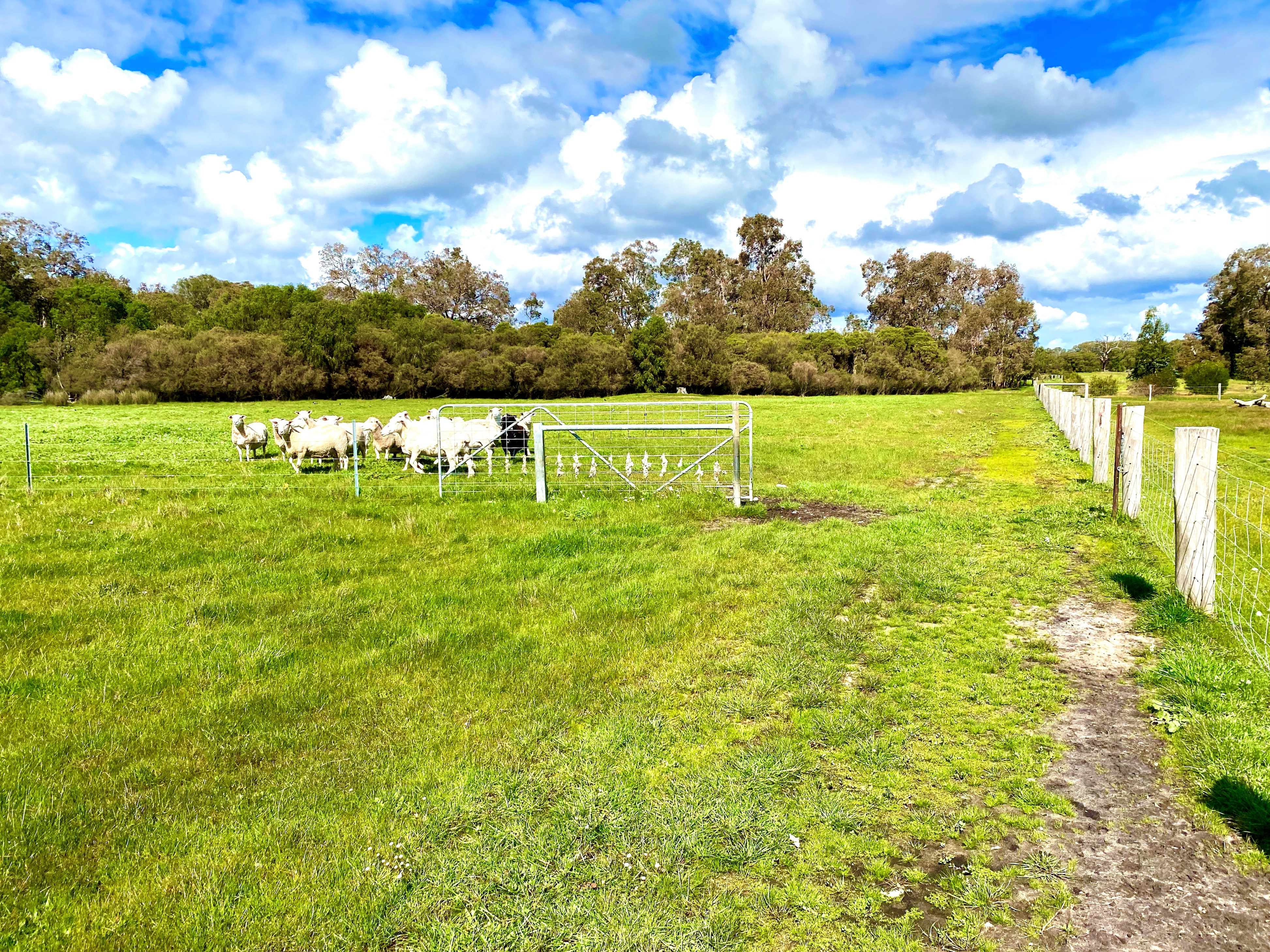 Lot 310 Holland Loop Crooked Brook - Cropping For Sale - 22503411 - ACTON South West (Bunbury)