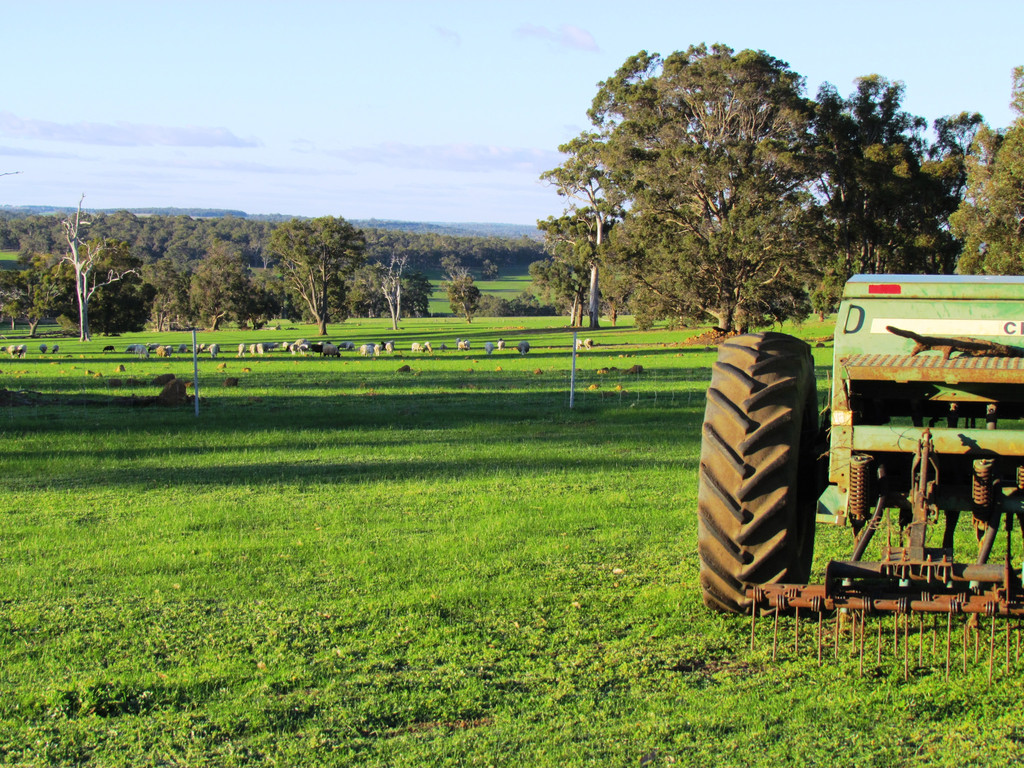 Lot 51 Gibbs Road Trigwell - Mixed Farming For Sale - 19307882 - ACTON South West (Bunbury)
