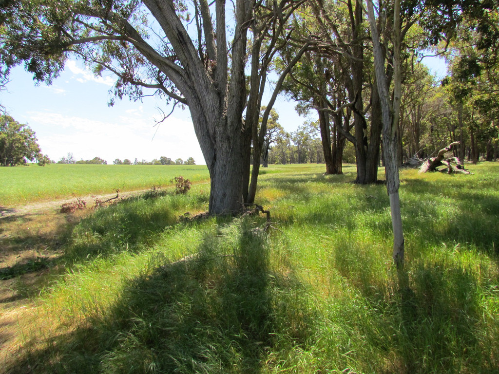 6 Six Mile Road Mayanup - Mixed Farming For Sale - 18766636 - ACTON South West (Bunbury)