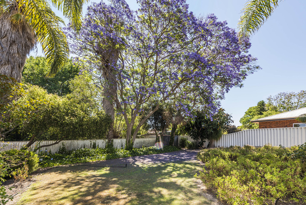 7 Arbordale Street Floreat - House For Sale - 20160192 - ACTON Dalkeith