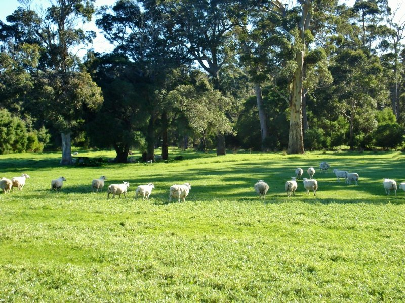 Awesome Finding Acreage Or Farms For Sale In Quindalup WA Has Never Been